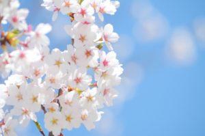花粉症対策は今から!